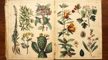 Pages of the Natural History of Plants booklet